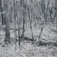 Deep Forest, 70x75, oil on linen